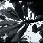 Nature's Art-3