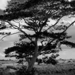 Trees & Plants-3