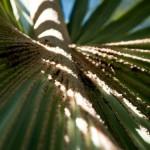 Trees & Plants-8