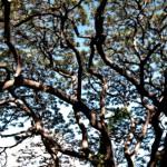 Trees & Plants-9